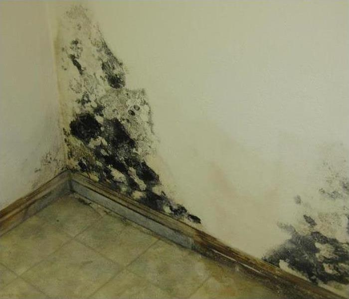 Mold Remediation Call the Mold Professionals at SERVPRO of Norfolk